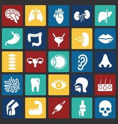 Human organs set on color squares background for vector