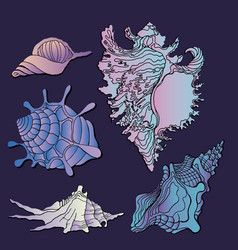 sea shells icon vector image