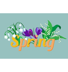 Spring flowers Crocus saffron lily of the valley s vector