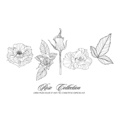 Rose sketch collection Hand drawn flower set vector image vector image