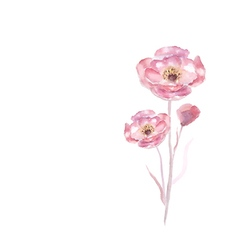 Pink watercolor flower vector image vector image