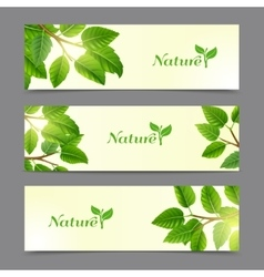 Green leaves eco banners set vector image