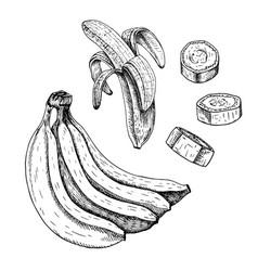 hand drawn set of banana sketch vector image