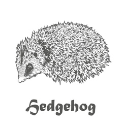Hedgehog sketch drawing isolated on white vector