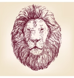 Lion hand drawn llustration realistic sketch vector image vector image