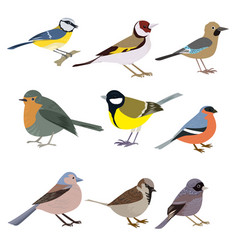 Set of beautiful multi-colored birds on a white vector