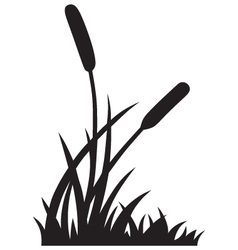 Silhouette reed vector image vector image