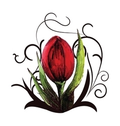 beautiful red tulip with swirls vector image