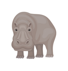 flat design of large gray hippo standing vector image