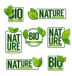 Nature and bio product doodle organic leaves vector