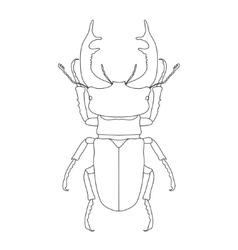 Stag-beetle Lucanus cervus Sketch of stag-beetle vector