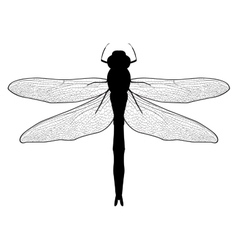 black and white of a dragonfly vector image