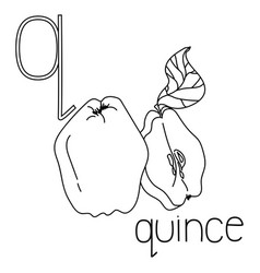 Coloring page fruit and vegetable abc letter q vector