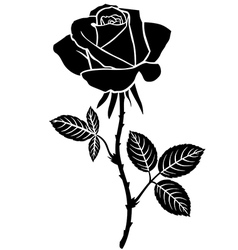 sweet rose vector image