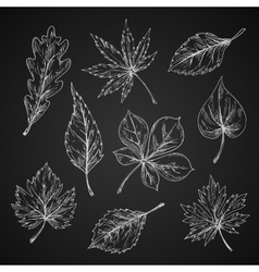 Chalk sketches of leaves silhouettes vector image