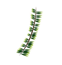 Green branch pine tree nature christmas vector