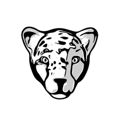 Head of Cheetah vector image
