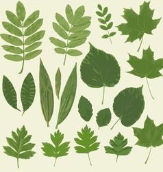 LeavesHerbarium03 vector