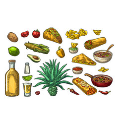 mexican traditional food and drink set tequila vector image