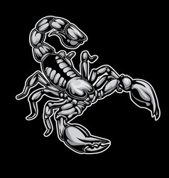 scorpions drawing on black background vector image