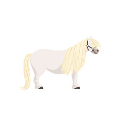 White pony thoroughbred horse vector
