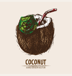 digital detailed coconut hand vector image