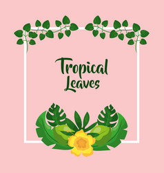 Tropical leaves hibiscus flower botanical vector
