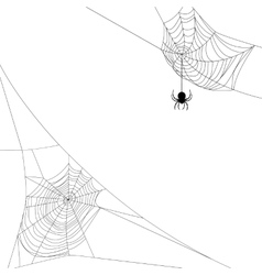 Two spider webs vector