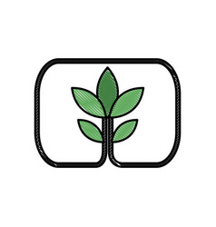 Drawing plant leaves natural environment symbol vector