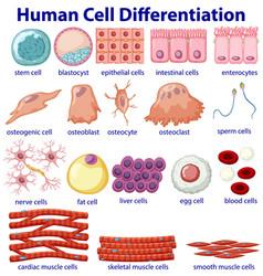 Information poster cellular differentiation vector