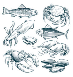 sketch seafood lobster shellfish fish shrimp vector image