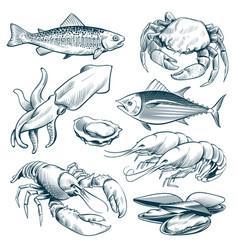 Sketch seafood lobster shellfish fish shrimp vector