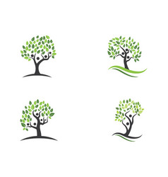 Family tree symbol icon vector