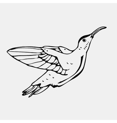 Hand-drawn pencil graphics colibri bird Engraving vector image