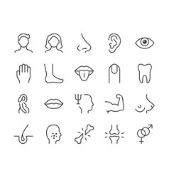 human body parts line icon minimal vector image