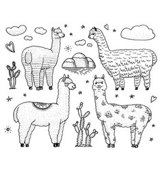set cute alpaca llamas or wild guanaco on the vector image