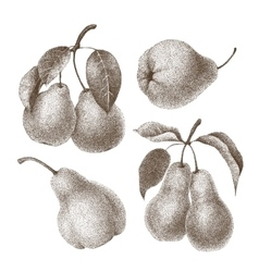 Set of pears vector