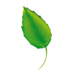 sticker green leaf icon vector image vector image