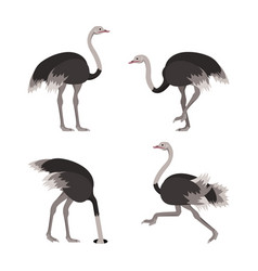 cartoon ostrich bird set vector image