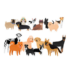 Different dogs breeds collection vector