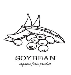 hand drawn soybean vector image