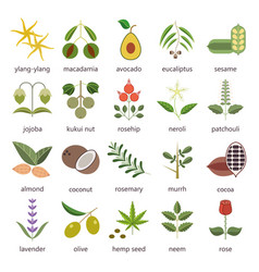 set of herbs and plants color flat icons used in vector image