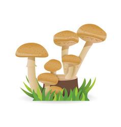 edible mushrooms growing on a stump vegetable vector image