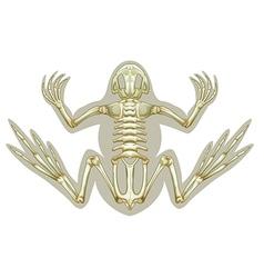 Frog skeletal system vector image