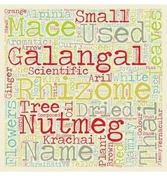 Spices Thai Food Galangal Nutmeg Tree And Krachai vector image