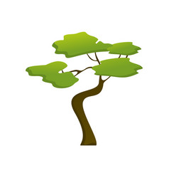 african isolated jungle tree plant vector image