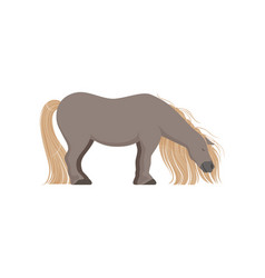 Cute grey pony thoroughbred horse vector