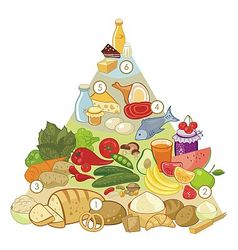 Omnivore Food Pyramid vector image