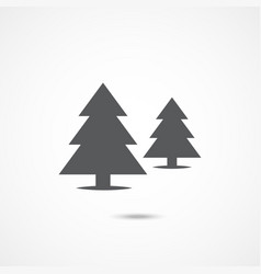 spruce flat icon vector image
