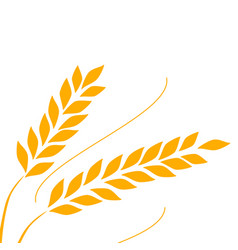 Agriculture wheat background vector